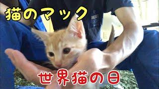 【猫のマック】世界猫の日 ‼️ World Cat Day ‼️