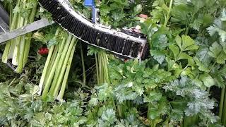 Rolnictwo Precyzyjne - Celery Harvest