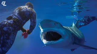 Swimming With Sharks  Groove Life Adventure