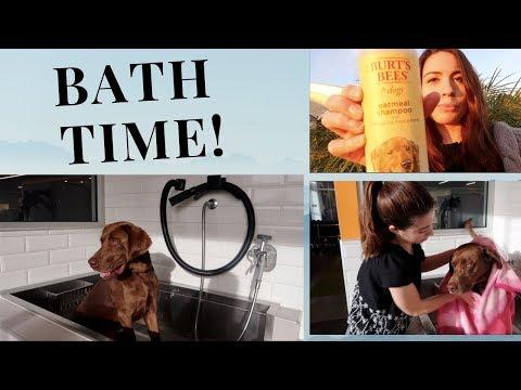 I Tried A Self-serve Dog Wash!