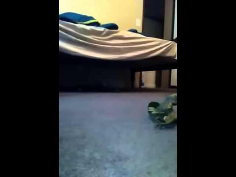 Tyrannosaurs vs Tyrannosaurs jp3