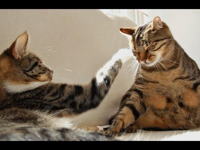 Interrupted Cat Nap