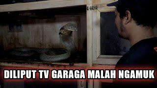DILIPUT TV GARAGA KING COBRA NGAMUK