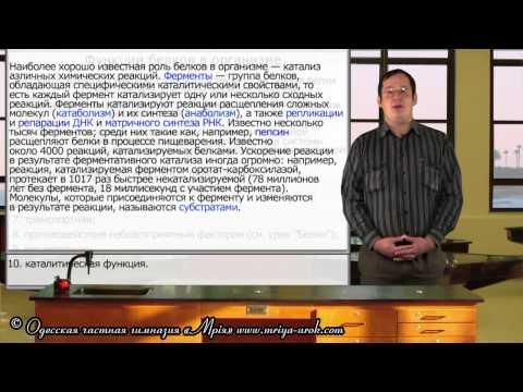Аминокислота L-Тирозин - описание, обмен в организме, отзывы
