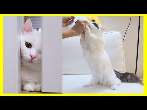 세젤예 고양이 귀여운 순간 모음