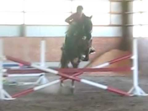 Difficult Jumping Demo- Skinnys, Bounce and Triple Combination -Morgan Horse!