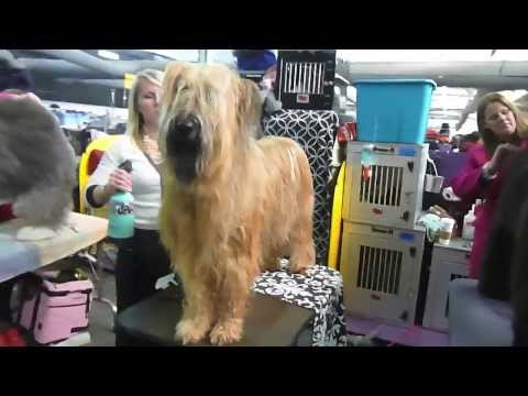 Westminster Dog Show — Grooming Montage