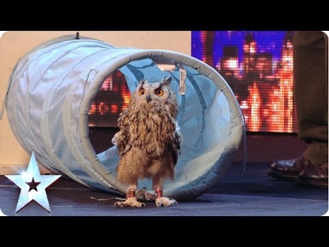 Rocky the owl is a hoot! - Britain's Got Talent 2014 - Berkley Owls