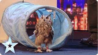 Rocky the owl is a hoot! - Britain