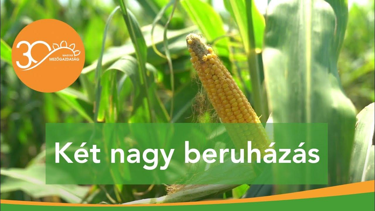Növénytermesztési és –feldolgozási beruházások Mezőhegyesen