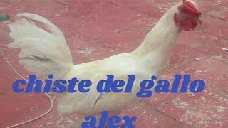 Chiste del gallo Alex