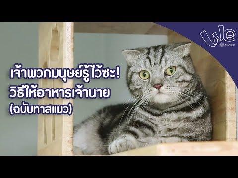 วิธีการให้อาหารแมว ฉบับทาสแมว : We Mahidol