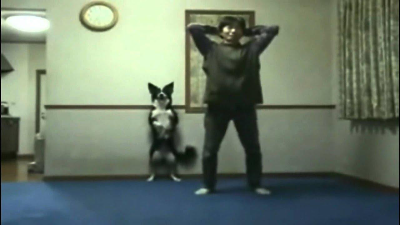 Par de orates 7 animales comicos youtube for Aparatos para hacer ejercicio