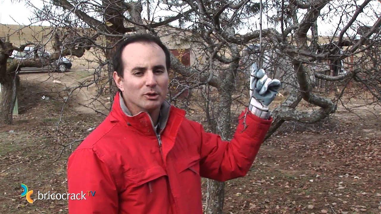 Podar frutales bricocrack youtube - Como se podan los arboles frutales ...