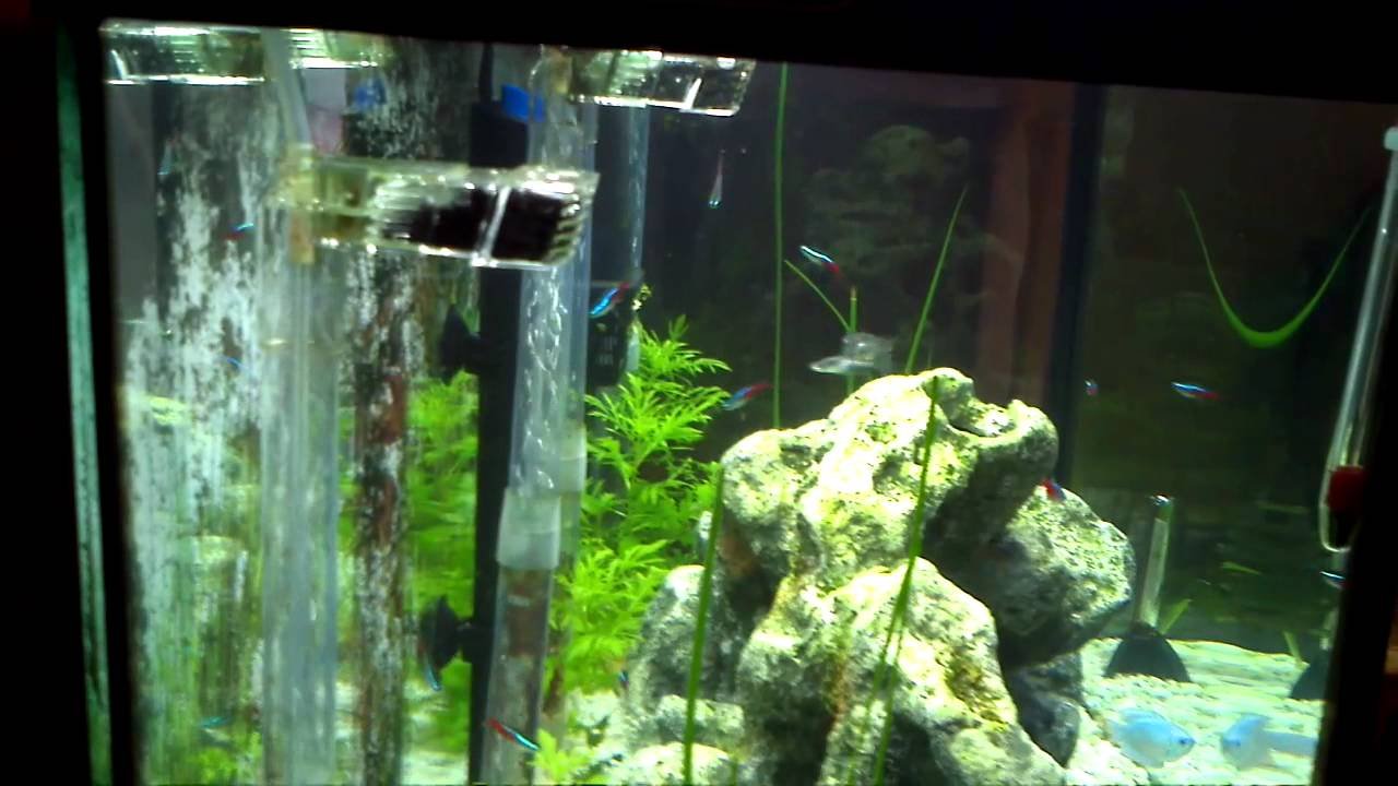 46 Gallon Bow Front With New Light 10 16 2012 Youtube
