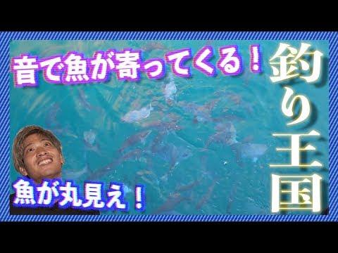 初日で釣り生活終了の危機?! 北大東島編 #1 【釣り王国】
