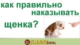 как правильно наказывать щенка  за что нужно наказывать щенка а за что нельзя наказывать щенка