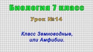 Биология 7 класс (Урок№14 - Класс Земноводные, или Амфибии.)