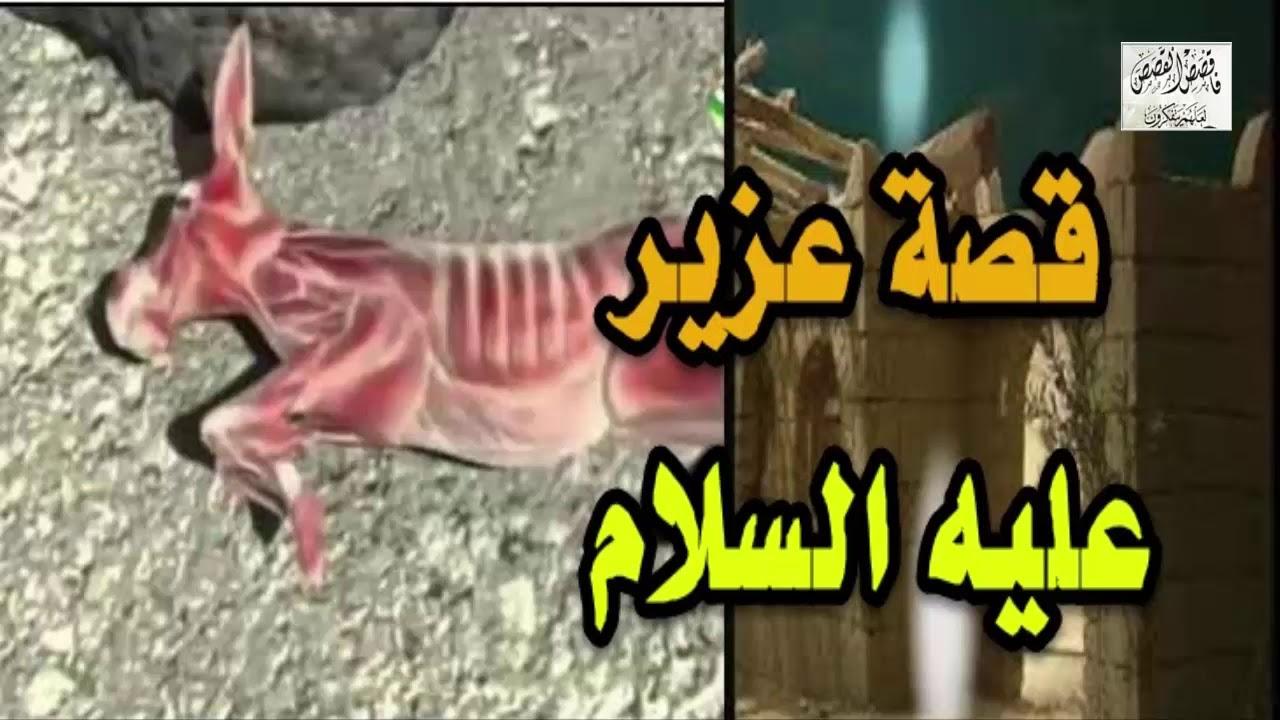 حيوان قتل من قبل الانسان 15