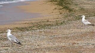 Курортное  Пляжный сезон еще не начался(Керченский полуостров славится двумя морями -Черное море и Азовское море ласково омывают берега Керченско..., 2015-05-28T09:10:06.000Z)