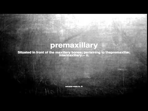 What does premaxillary mean