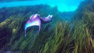 Mermaid Melissa Calming Underwater Footage: Extended Mermaid Film