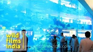 Dubai Aquarium And Underwater Zoo At Dubai Mall