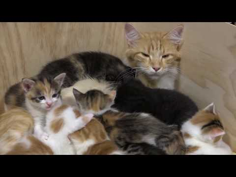 14 Kittens -- A Big Cat Family!