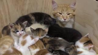 猫の手も借りたい!子だくさん14匹、子育てを頑張るお母さん猫の奮闘ぶり