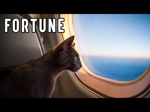 JetBlue, Delta, and United Update Their Emotional Support Animal Policies I Fortune
