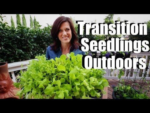 how-to-transition-indoor-seedlings-to-outdoors-(hardening-off)-/-spring-garden-series-#3