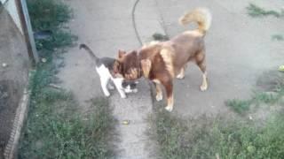 Собака нюхает под хвостом у кота