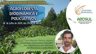 Agrofloresta Biodinâmica e Policultivos com Marcelo Martins Ribeiro [CONVERSAS BIODINÂMICAS]