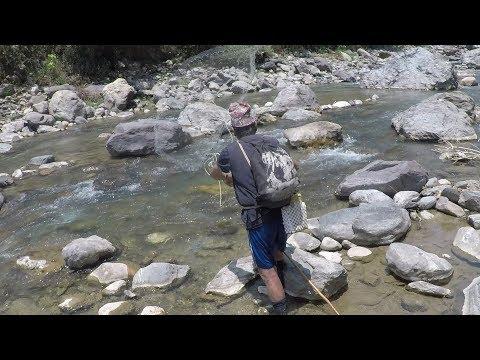 FISHING IN NEPAL | HIMALAYAN TROUT FISHING IN NEPAL | TRIPLE CAST-NET FISHING | SMALL RIVER FISHING