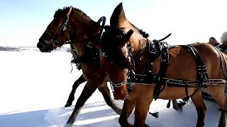 Кони буланые, кони вороные... Людмила Иванова 13. Авторская песня. Клип - Ирина Жукова-Каменских.