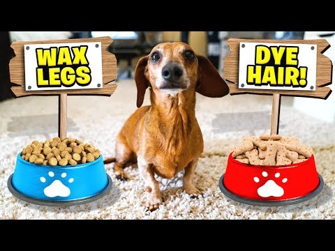 My DOG Controls My Life For A Day *24 HOUR CHALLENGE*