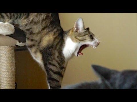 猫耳いただきまーす! Cats Love Bites Your Ears Youtube