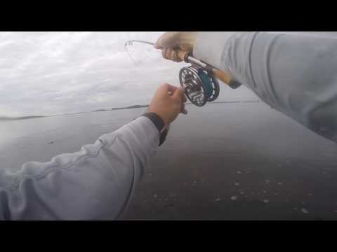 Striper Fly Fishing At Castle Island
