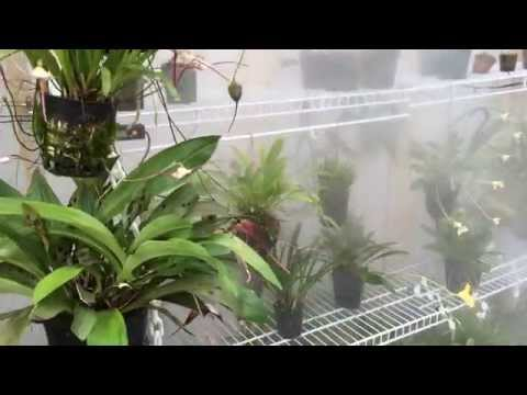 DIY Greenhouse fogger system for Orchids, Carnivorous Plants and more!