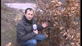 PKK TERÖR ÖRGÜTÜ TOKAT SALDIRI CEM TEKEL KANAL D HABER