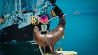 Дельфинарий Немо шоу с животными