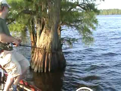 Reelfoot lake may 23 youtube for Reelfoot lake crappie fishing