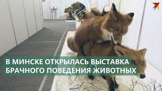 Шокирующая выставка в Минске: Брачные игры животных