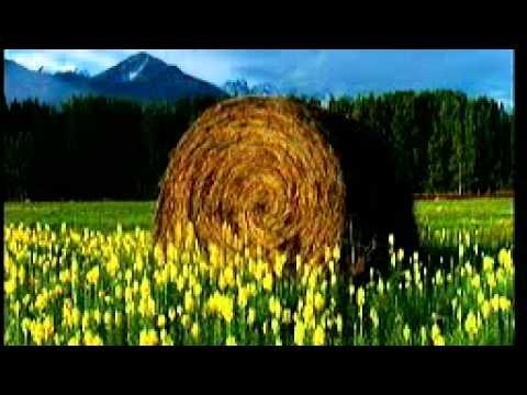 Alperose Polo Hofer Karaokeversion mit Magic  Sing
