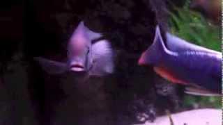 Malawi Aquarium Impressionen 1