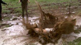 Se Alexander Alans spektakulära magplask i gyttjan - Farmen (TV4)