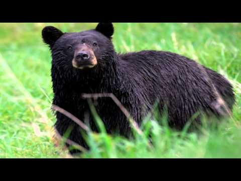 Dangerous Animals Let Loose Near Zanesville Ohio - Report & Commentary
