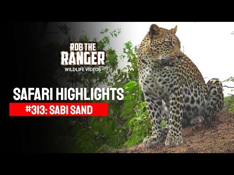 Idube Safari Highlights #313: 25 - 31 December 2014 (Latest Sightings) (4K Video) #youtubeZA