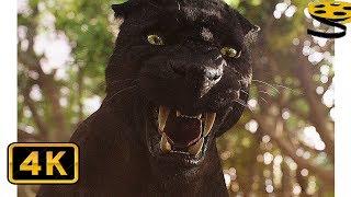 Багира тренирует Маугли | Книга джунглей (2016) HD