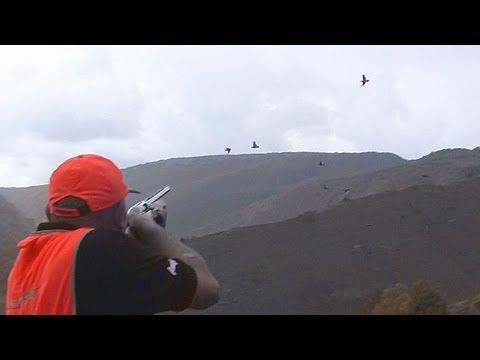 keklik avı  sivas 2011  perdiz perdrix chukar partridge coturnice